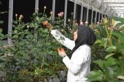 راه اندازی گلخانه ای برای اشتغال بانوان ناشنوا