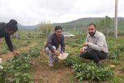 کارآفرینی که با کاشت گل گاوزبان، امید را در مردم منطقه زنده کرد