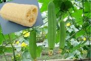 روایت کارآفرینی که توانست از یک گیاه ناشناخته، لیف تولید کند