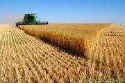 رکورد تولید گندم در سال ۸۶ شکسته شد