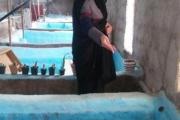 بانوی کارآفرین بافقی برای نخستین بار پنج هزار قطعه ماهی زینتی پرورش داد