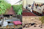 کارآفرینی روستایی؛ ارزان ترین راه برای توسعه روستایی