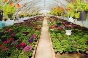 اشتغال 500 نفر در بزرگترین شهرک گلخانه ای ایران به همت کارآفرین آوه ای