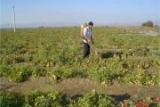 22 میلیون تن محصولات باغی در کشور تولید شد