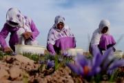 روایت یک زن کارآفرین نمونه روستایی از شروع صفر تا  نان رساندن به 30 خانوار