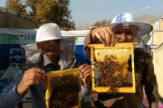 پرورش زنبور و تولیدعسل ارگانیک در پشت بام خانه، کسب و کاری کم هزینه و پرسود در کرج