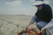 کارآفرینی که علاوه بر بازار داخلی سالانه ۵۰ کیلوگرم زعفران به ترکیه صادر می کند