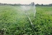 کاهش ۵۰ درصدی مصرف آب با آبیاری نوین