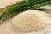 واردات ۱۶ میلیون دلاری برنج از آمریکا به سفارش دولت