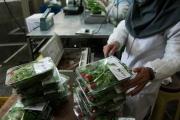 اشتغال زایی بانوی کارآفرین با تاسیس کارگاه تهیه و بستهبندی سبزیجات