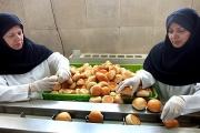21 درصد مشاغل کشور در استان خراسان رضوی ایجاد شده است