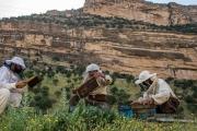 درآمد ۱۰۰ میلیونی کارآفرین گنابادی از محل زنبور داری