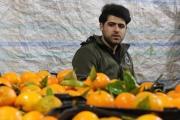 کارآفرینی جوان دهه هفتادی برای 50 خانوار