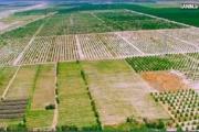 70 درصد از اراضی کشاورزی سند ندارند